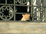 Istanbul - Katze